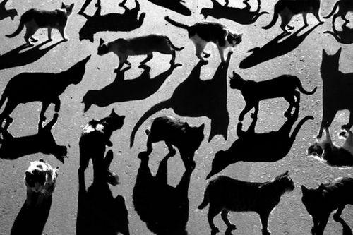 Cats: Cat Shadow, Kitty Cat, Catshadow, Shadow Cat, Black White, Cats Shadow, Black Cat