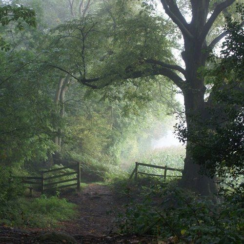 Looks like early morning on a New Jersey forest path leading to a meadow or a planted field..
