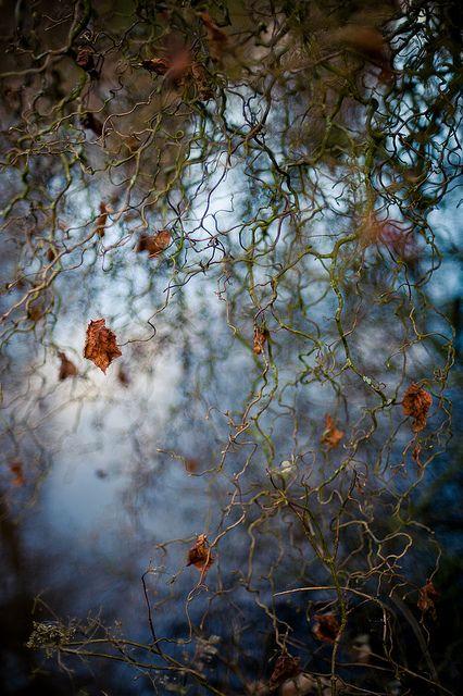 By Livia Lazar