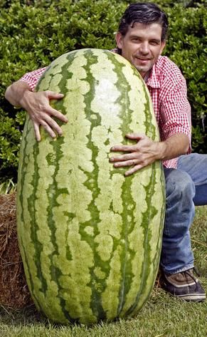 265-pound watermelon grown by Mark Clement of Michigan.