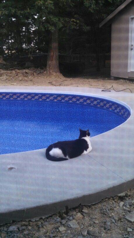 Pool patrol  Bugzie