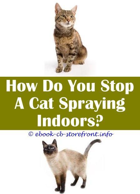 Mind Blowing Cat Spraying Smell Baking Soda