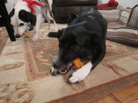 Sophie in the Kitchen: DIY Sweet Potato Dog Chews