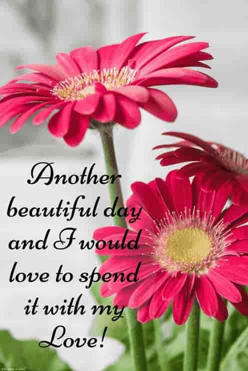 Best Good Morning Hd Images Wishes Pictures And Greetings Good Morning Flowers Pictures Good Morning Picture Messages Good Morning Flowers