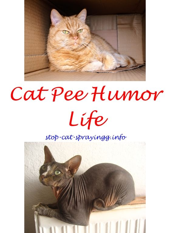 Cat Pee Odor Products Male Cat Spraying Cats Cat Spray Smell