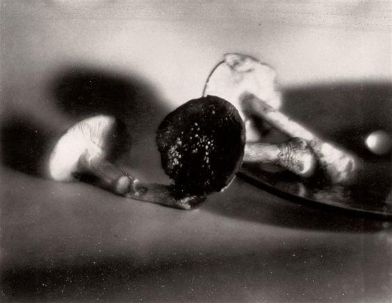 Giulio Parisio - Nature morte aux champignons, 1934