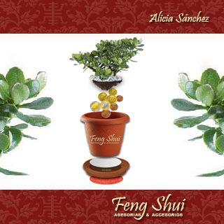 La planta del dinero en el se de la casa colocar una for Feng shui plantas dentro del hogar