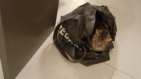Geef een kat een doos, een tas of een zak....