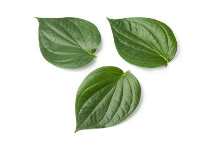 33 Top Health Benefits of Betel Leaf (No.21 is Excellent!)