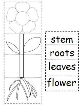math worksheet : plant parts flip book  flip books plants and parts of a plant : Parts Of A Plant Worksheet Kindergarten