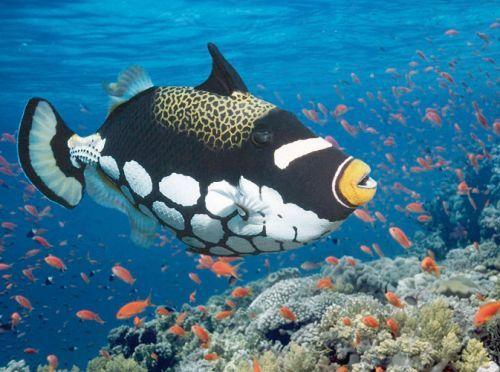 Malediven-Unterwasserwelt
