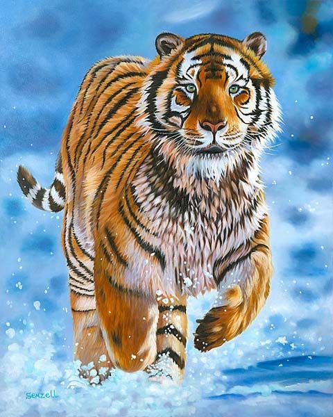 Tiger Running Hd Wallpaper