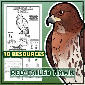 Red-Tailed Hawk -- 9 Resources -- Coloring Pages, Reading & Activities