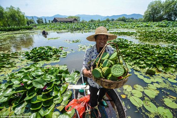 A Chinese farmer displays her bounty of lotus seeds. They are a delicacy in China and are also used for traditional Chinese medicine