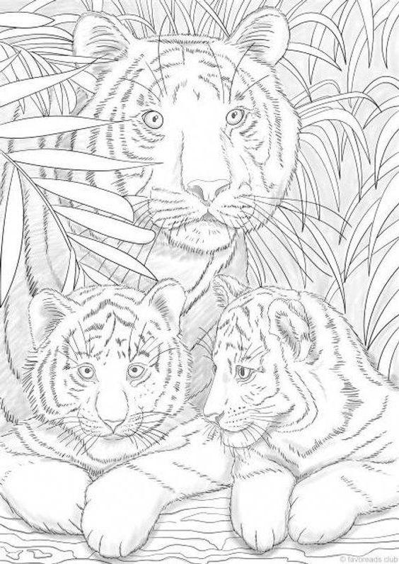 ausmalbilder f erwachsene tiger  aglhk
