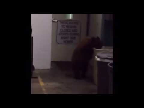 This Bear Could Be Better at Taking Directions from Placer County Sheriff's…