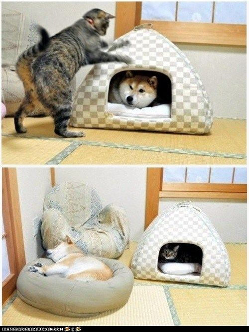 funny pictures - Goggies R Owr Friends: The Takeover