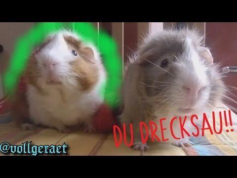 Youtube Meerschweinchen Hunde Lachen