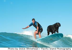 Surfing Lab