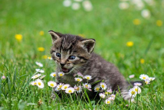 Kwiaty Bezpieczne Dla Kota Jakie Rosliny Lubia Koty Codzienny Pl In 2020 Kittens Cutest Cats Animals