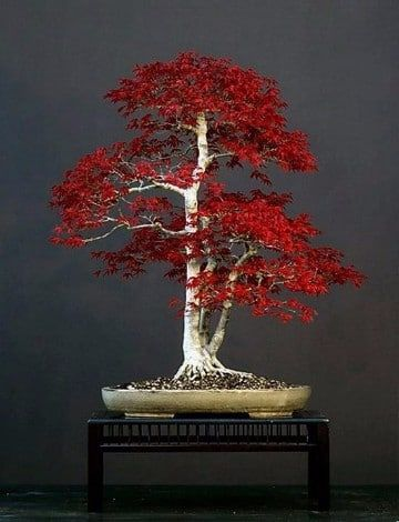 Plantas ornamentales de exterior perennes imagenes de la for Plantas ornamentales de exterior