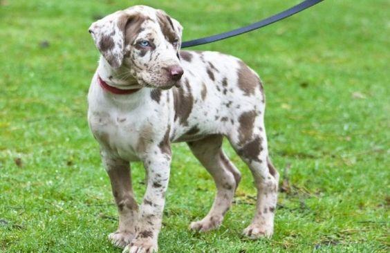 Schleppleinen für Spaziergänge und Hundetraining