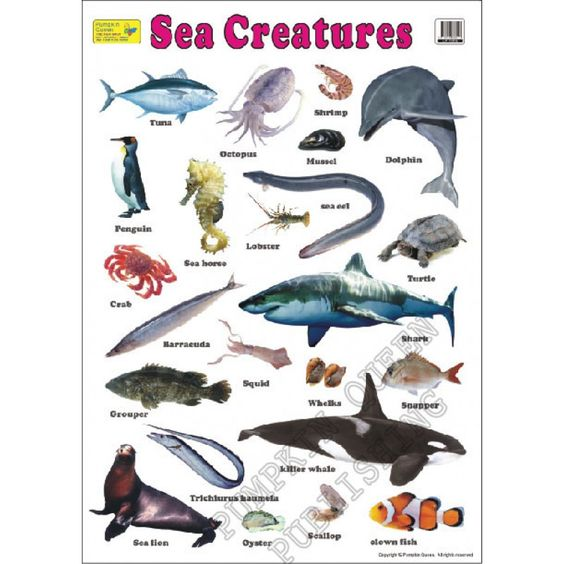 Lp 1016 Jpg 800 215 800 Sea Animals List Names Pinterest