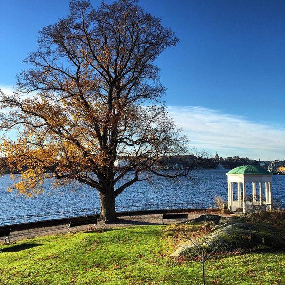 Fresh air blue sky and total peacefulness. A sunny November day in Stockholm! #visitstockholm by visitstockholm