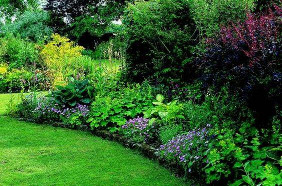 Jardin d 39 ombre jardin pinterest jardins plantes de for Architecte de jardin belgique