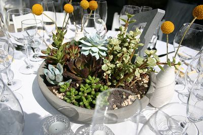 these succulent center pieces are awesome