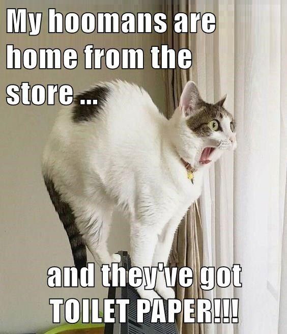 Top 25 Memes Of The Week Cheezburger Users Edition 140 Animal Memes Clean Funny Animal Memes Funny Cat Videos