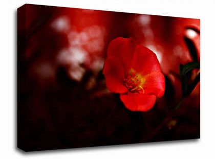 Cherry Red floral canvas from only £19.99 at Infusion Art http://www.infusionart.co.uk/products/Cherry-Red-251417.aspx