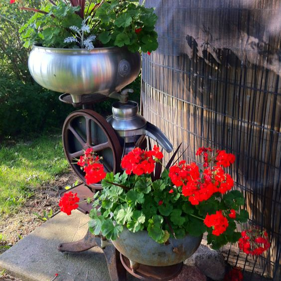 Use you old cream separator for geraniums a perfect pair for Garden separator