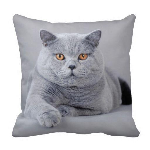 British Shorthair Cat Cushion Zazzle Co Nz British Shorthair Cats British Shorthair Cat Throw Pillow