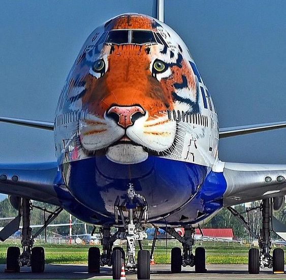 Transaero unveils its Boeing 747-400 Siberian Tiger livery on EI-XLN in support of the Amur Tiger Center