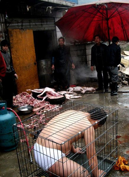 un artiste chinois, Pian Shankong, s'est installé à l'intérieur d'une cage devant une boucherie canine dans un marché de Guiyang, capitale de la province du Guizhou pour protester contre la consommation de la viande de chien, alors que la...