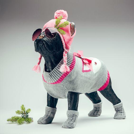 Bonnet Pour Chien Rose M L Dinosaur Stuffed Animal Pug Life Pugs