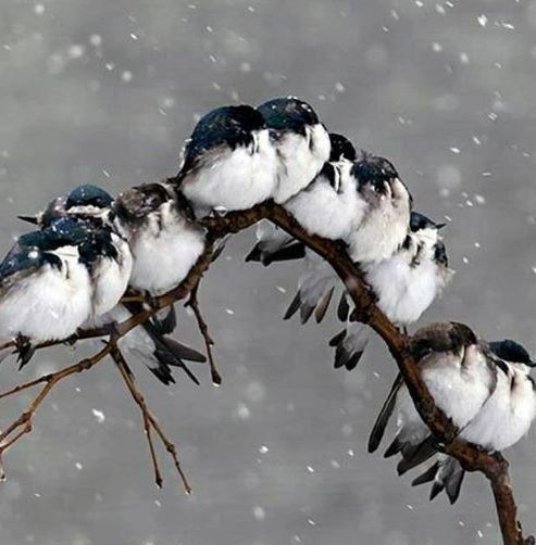 """The Bird Choir ~ Singing Winter's Song ♫ ~ Together, All-Along..."":"