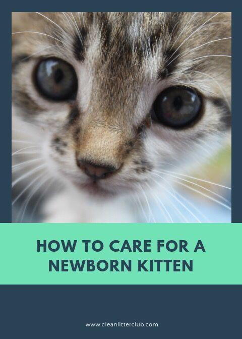 How To Care For A Newborn Kitten Newborn Kittens Kitten Care Kittens