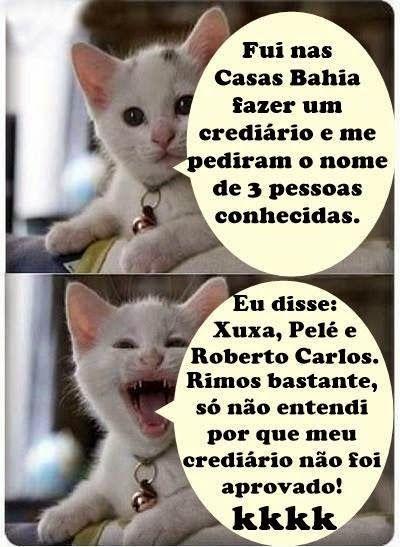piadas com o gato kkkk - Pesquisa Google