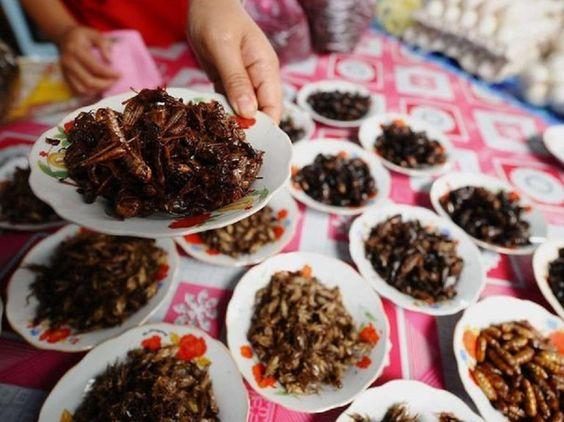Entomophagie, manger des insectes pour le déjeuner …