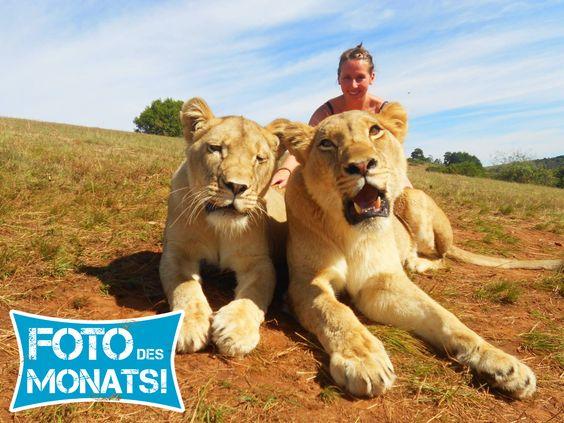 Kristin hat uns dieses Bild geschickt und damit den Fotowettbewerb gewonnen. :-) Entstanden ist der Schnappschuss in #Südafrika.
