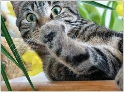Ze crois que z'ai fais une boulette ! #cat