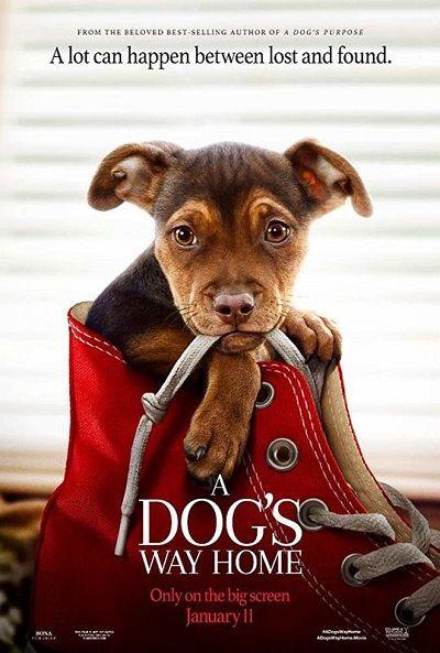 Sadık Dostum A Dog S Way Home 2019 Türkçe Dublaj Hd İndir Tam Film Film Ashley Judd