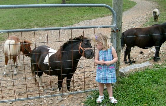 Google Image Result for http://media.knoxnews.com/media/img/photos/2010/07/22/072210pony01_t607.jpg