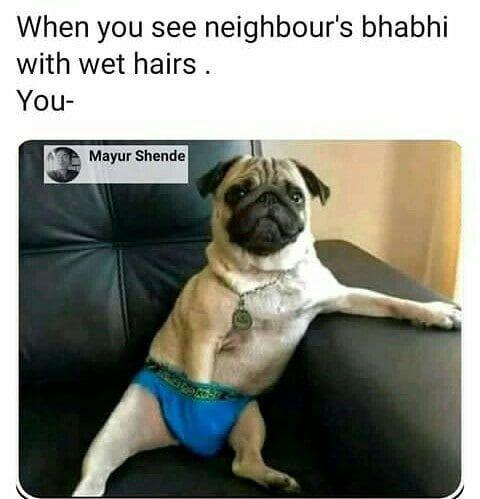 Puggle Pug Dogfunny Funnydogs Funny Pugs Pugpuppies Indian