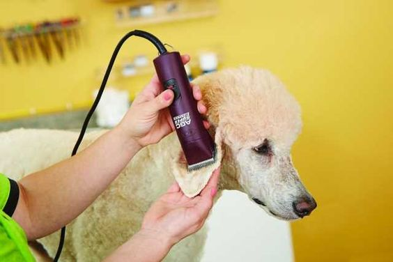 How to Start a Dog Grooming Business - Top Dog Tips