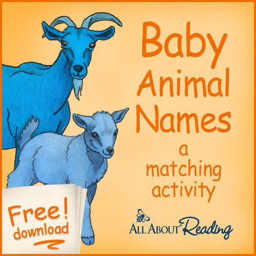 Baby animals learn (Book, 1999) [WorldCat.org]