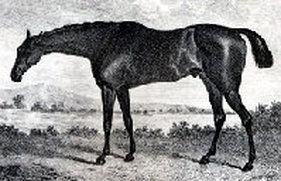 Sorcerer(1796)(Colt)Trumpator- Young Giantess By Diomed. 3x3 To Matchem, 5x5x5 To Crofts Partner, 5x5x5x5 To Godolphin Arabian. 21 Starts 15 Wins 5 Seconds 1 Third. Leading Sire In England & Ireland In 1811, 1812, 1813.