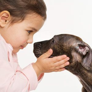10 Surprising Safety Hazards: The Family Dog (via Parents.com)